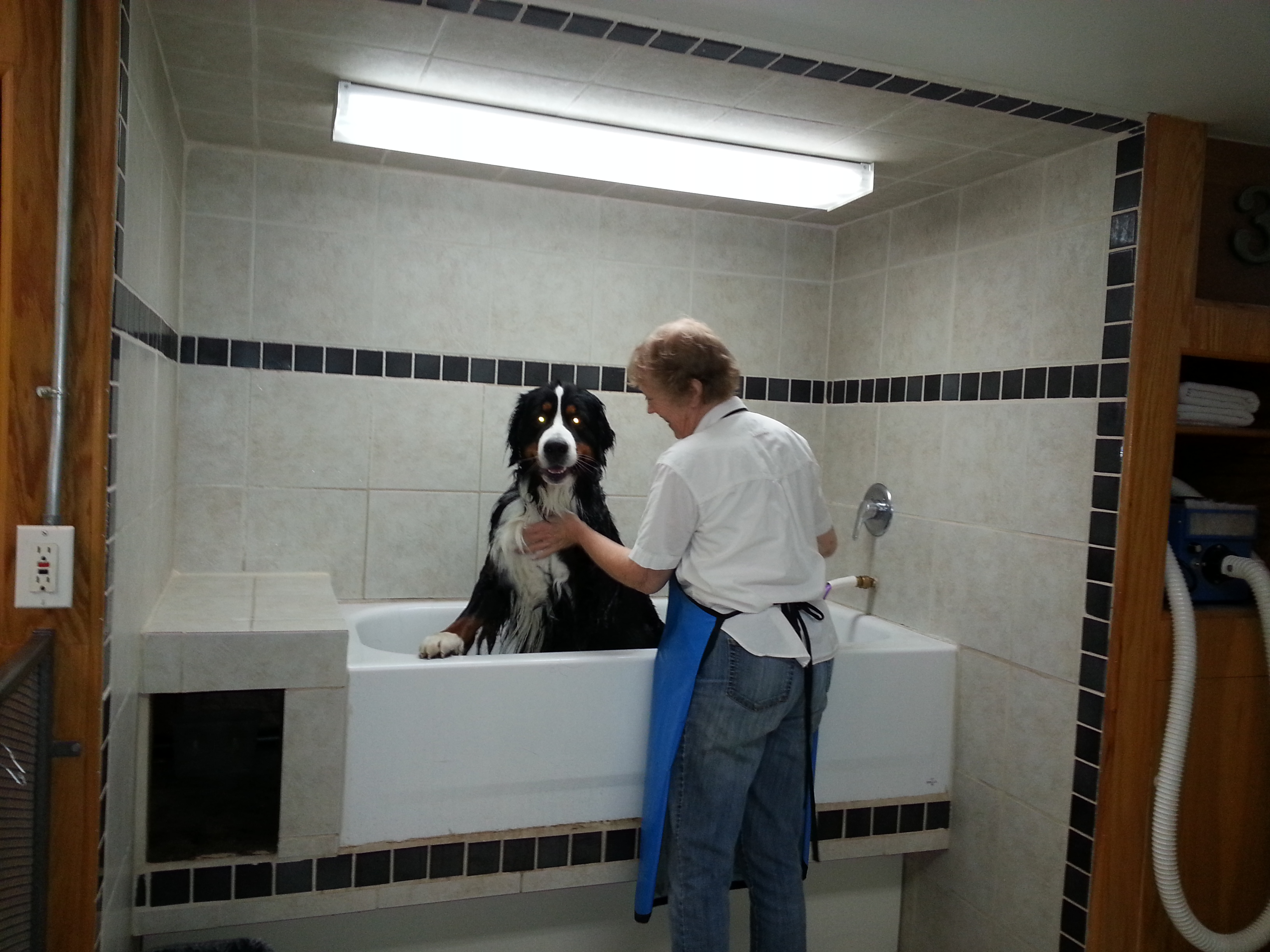 Dog groomer self serve dog bathing monroe wa self serve dog 20140328 131644 solutioingenieria Images